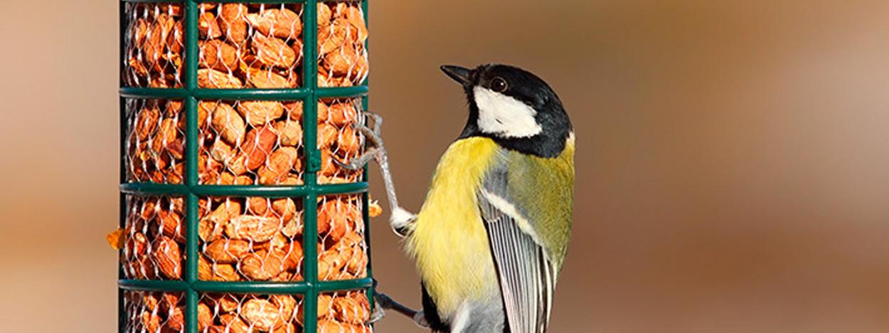 Birdlife.
